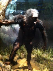 Illustration of Lucy: classified as a hominin, with capacity of bipedal upright walk